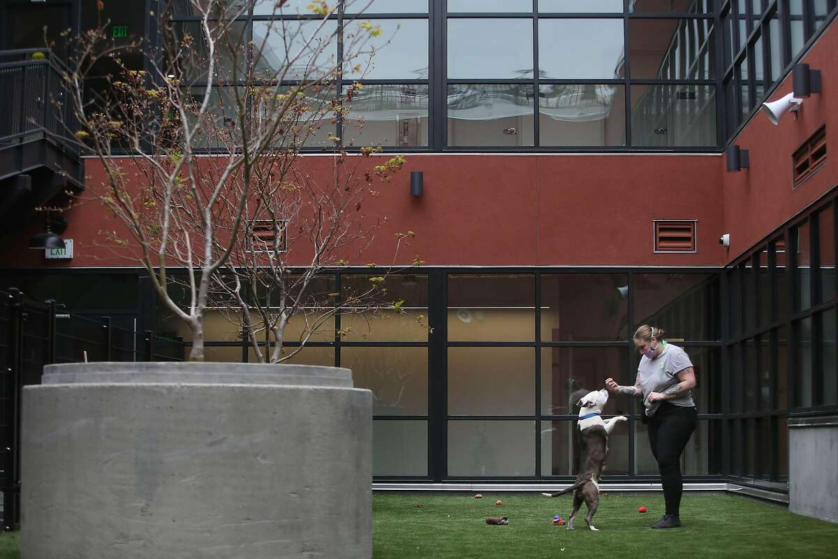 Katy Jones gives a treat to Harley in the outdoor area of the new San Francisco Animal Care and Control shelter.