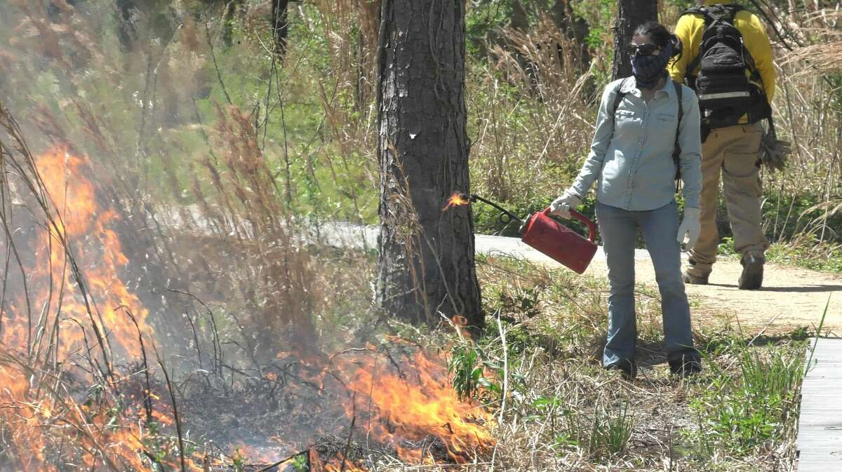 A worker looks back on a series of fires she just set during a prescribed burn at the Houston Arboretum on Thursday, March 25, 2021.