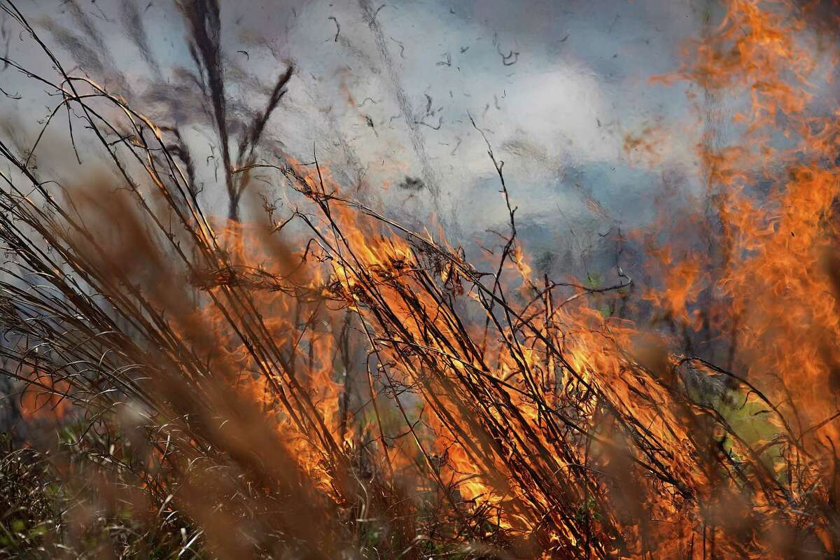 Over seven acres burn during a prescribed fire at the Houston Arboretum & Nature Center on Thursday, March 25, 2021.
