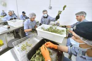 Workers at Advanced Grow Labs of West Haven, one of several growers in Connecticut that supply medical marijuana, in 2018.