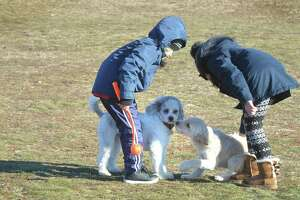 Sarah Estay and Mathias Vargas let their dog Tobita meet a new friend during play time at Taylor Farm dog park on a cold Sunday January 14, 2018 in Norwalk Conn. Students this year on spring break were met with similarly cold weather, prompting parents to ask the schools to switch the break back to April.