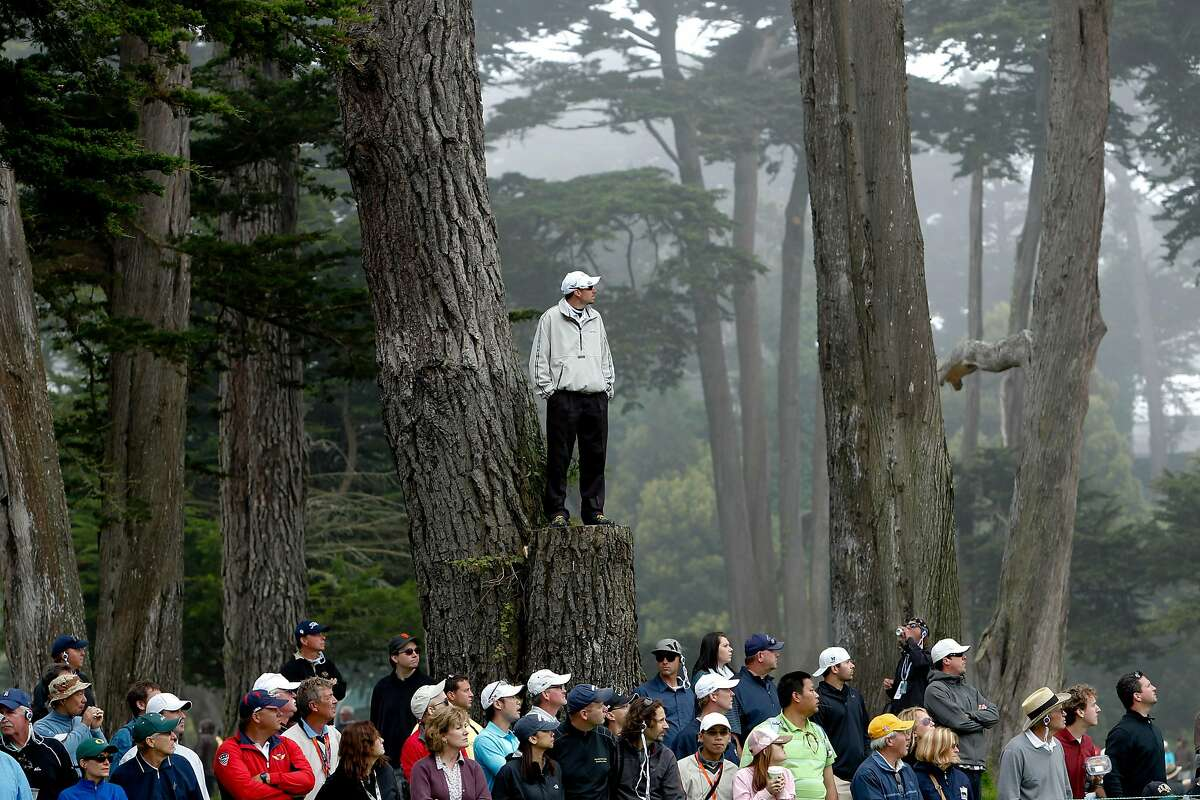 A spectator climbs a tree for a better view of No. 11 during the final round of the 2012 U.S. Open at the Olympic Club. Fans will not be allowed for this year's U.S. Women's Open at Olympic.