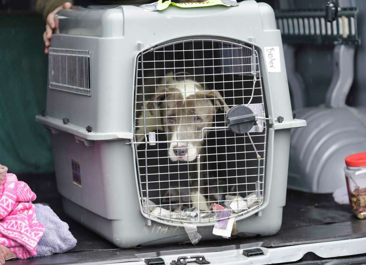 A dog brought up from the Greater Birmingham Humane Society is seen in a crate after arriving at the Mohawk Hudson Humane Society on Sunday, March 28, 2021, in Menands, N.Y. The shelter in Birmingham needed to free shelter space in order to help animals displaced by the tornado and to be able to provide temporary shelter to families in crisis. Over 30 animals were brought up to the greater Capital Region with the majority coming to Mohawk Hudson Humane Society and some going to the Montgomery SPCA and some to APF. Ashley Jeffrey Bouck, CEO of Mohawk Hudson Humane Society, said that when the animals are available for adoption they will be listed on the shelter's website and those interested in adopting an animal should visit www.MohawkHumane.org to set up an appointment to visit the shelter. (Paul Buckowski/Times Union)