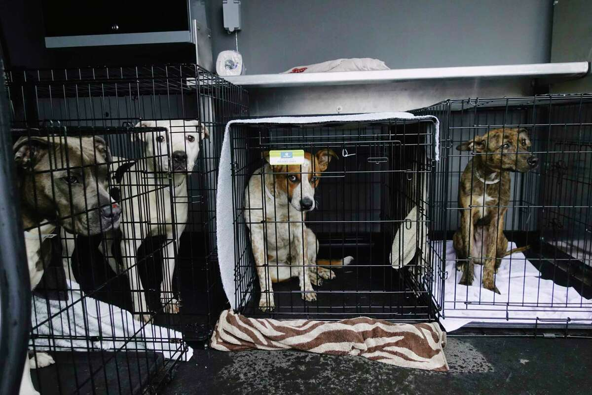 Dogs brought up from the Greater Birmingham Humane Society are seen in crates in a van after arriving at the Mohawk Hudson Humane Society on Sunday, March 28, 2021, in Menands, N.Y. The shelter in Birmingham needed to free shelter space in order to help animals displaced by the tornado and to be able to provide temporary shelter to families in crisis. Over 30 animals were brought up to the greater Capital Region with the majority coming to Mohawk Hudson Humane Society and some going to the Montgomery SPCA and some to APF. Ashley Jeffrey Bouck, CEO of Mohawk Hudson Humane Society, said that when the animals are available for adoption they will be listed on the shelter's website and those interested in adopting an animal should visit www.MohawkHumane.org to set up an appointment to visit the shelter. (Paul Buckowski/Times Union)