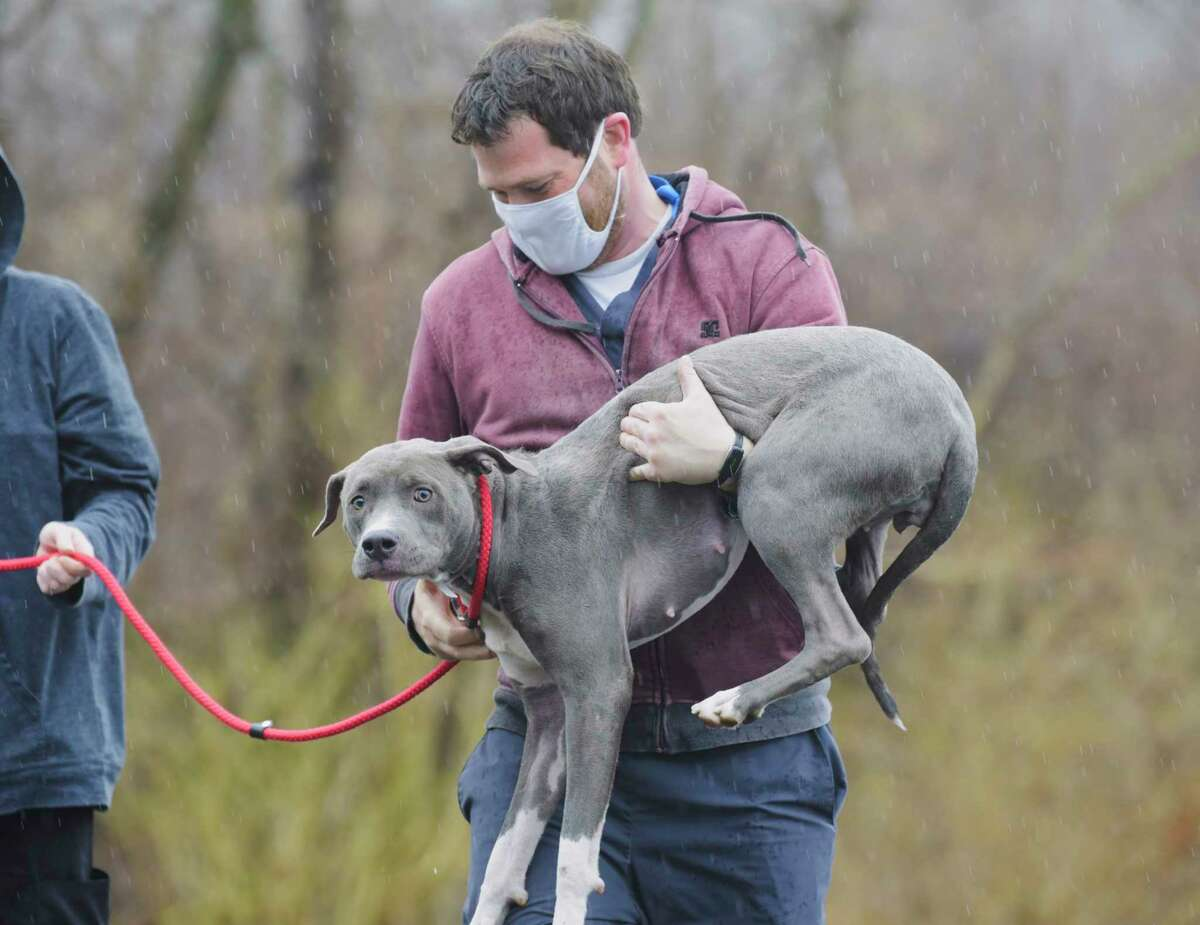 David Sokol, animal care supervisor at the Mohawk Hudson Humane Society, carries Paris into the shelter as dogs and cats from the Greater Birmingham Humane Society arrived at the Mohawk Hudson shelter on Sunday, March 28, 2021, in Menands, N.Y. The shelter in Birmingham needed to free shelter space in order to help animals displaced by the tornado and to be able to provide temporary shelter to families in crisis. Over 30 animals were brought up to the greater Capital Region with the majority coming to Mohawk Hudson Humane Society and some going to the Montgomery SPCA and some to APF. Ashley Jeffrey Bouck, CEO of Mohawk Hudson Humane Society, said that when the animals are available for adoption they will be listed on the shelter's website and those interested in adopting an animal should visit www.MohawkHumane.org to set up an appointment to visit the shelter. (Paul Buckowski/Times Union)