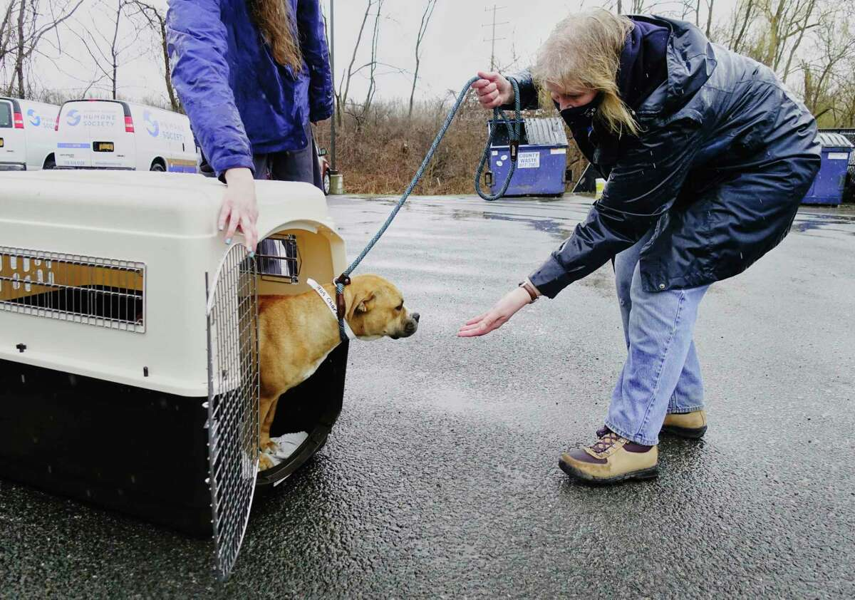 Mohawk Hudson Humane Society volunteer, Anne Brockenauer, tries to coax Charlene out of her crate as dogs and cats from the Greater Birmingham Humane Society arrived at the Mohawk Hudson shelter on Sunday, March 28, 2021, in Menands, N.Y. The shelter in Birmingham needed to free shelter space in order to help animals displaced by the tornado and to be able to provide temporary shelter to families in crisis. Over 30 animals were brought up to the greater Capital Region with the majority coming to Mohawk Hudson Humane Society and some going to the Montgomery SPCA and some to APF. Ashley Jeffrey Bouck, CEO of Mohawk Hudson Humane Society, said that when the animals are available for adoption they will be listed on the shelter's website and those interested in adopting an animal should visit www.MohawkHumane.org to set up an appointment to visit the shelter. (Paul Buckowski/Times Union)