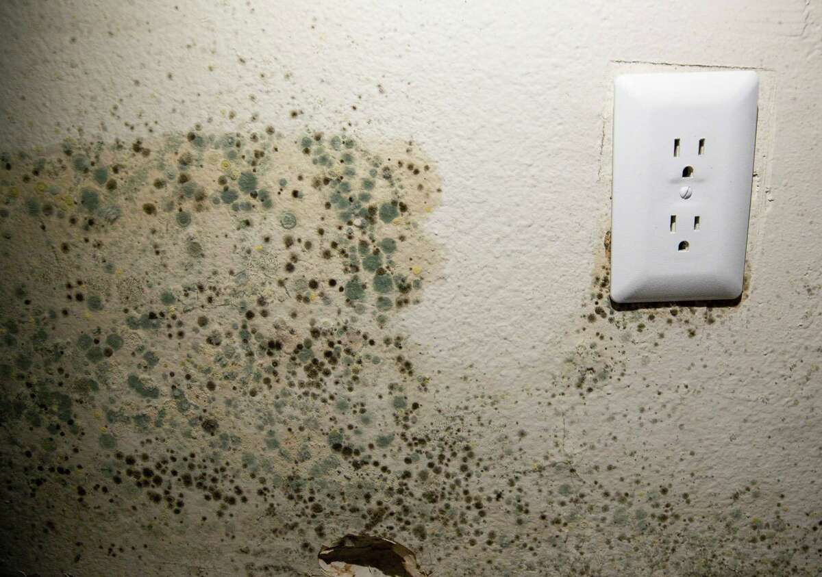 Mold growing on the walls of the bedroom where Jaider Verá, his wife, and their five-year-old daughter sleep, after pipes burst during the winter storm last month, at Villas Del Paseo apartment complex on Wednesday, March 17, 2021, in Houston. A month after the winter storm knocked out power and burst water pipes across the state, many renters are still living with the damage and realizing that renter protections are especially weak in Texas. Verá has water seeping out of one of his walls and mold is spreading through the walls.