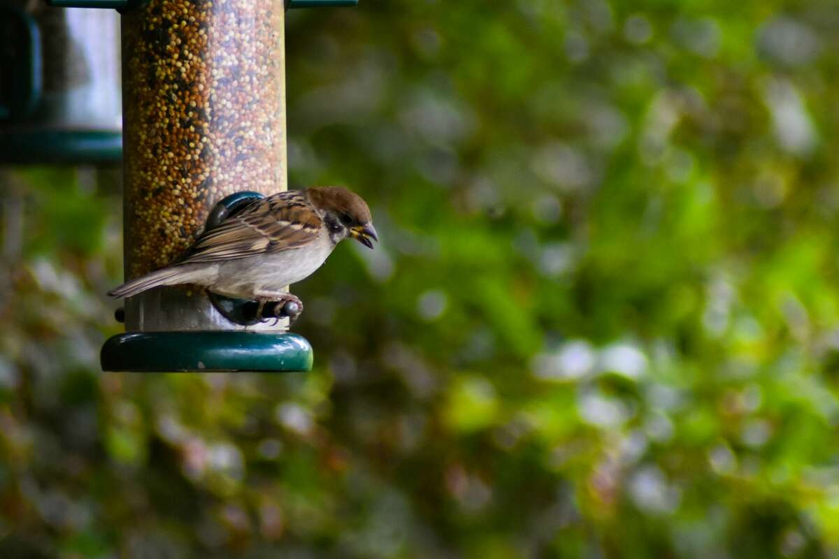 Wash. wildlife officials: Residents can put bird feeders back up