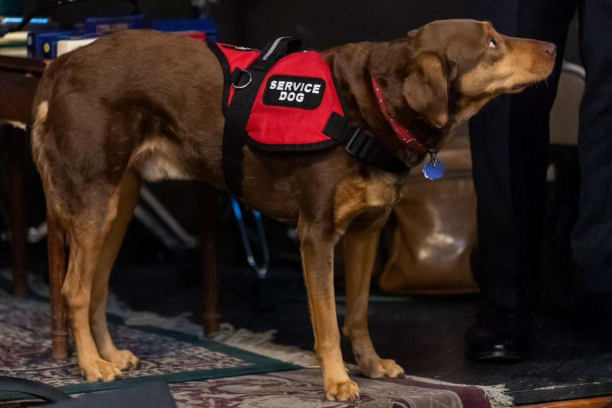 Allowing owners to self-certify their pets as service dogs promotes the goals of the 1990 federal law banning discrimination against the disabled, the Ninth U.S. Circuit Court of Appeals in San Francisco said.