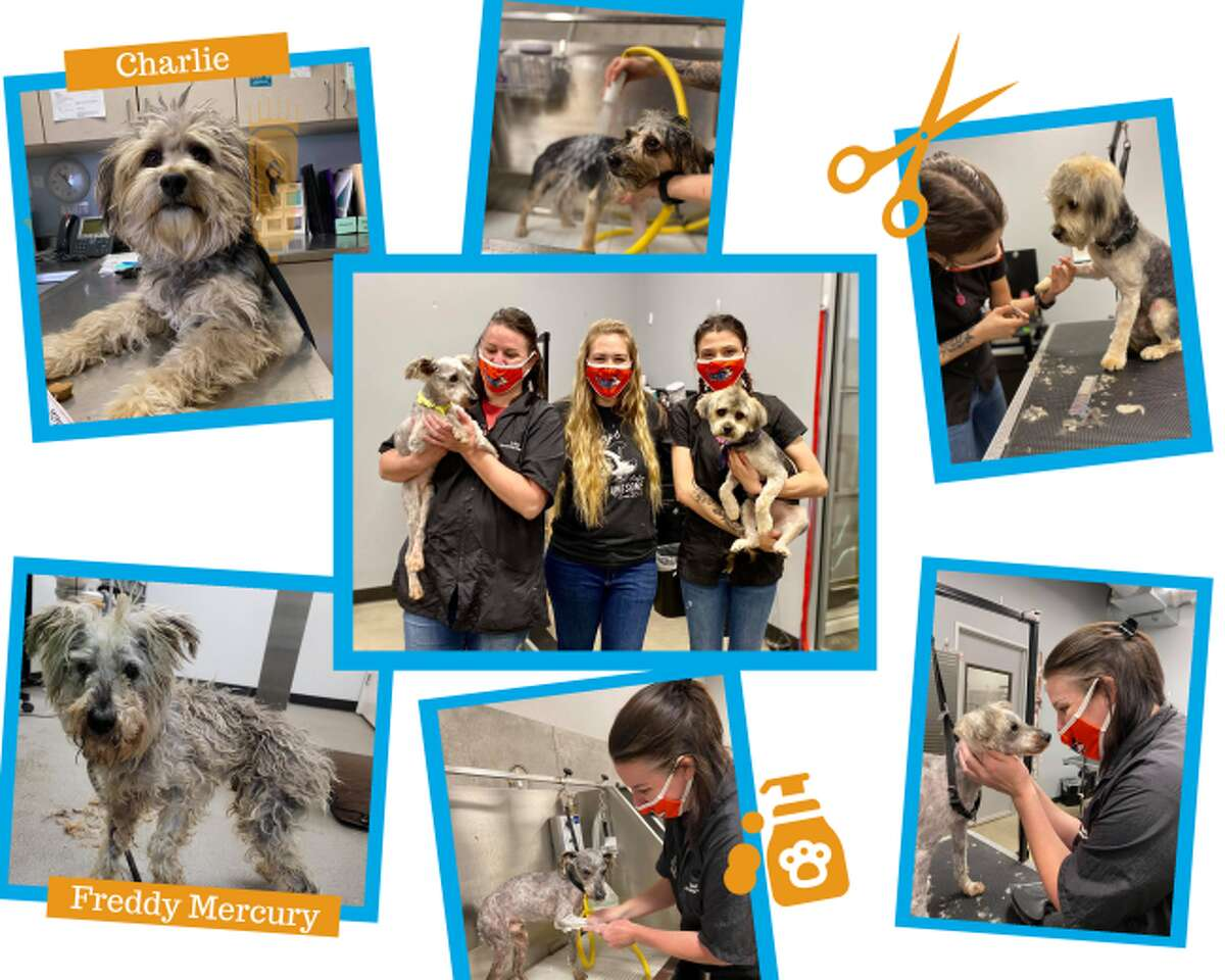 YourSA Best Pet Groomer Winner: Lucy's Doggy Daycare and Spa