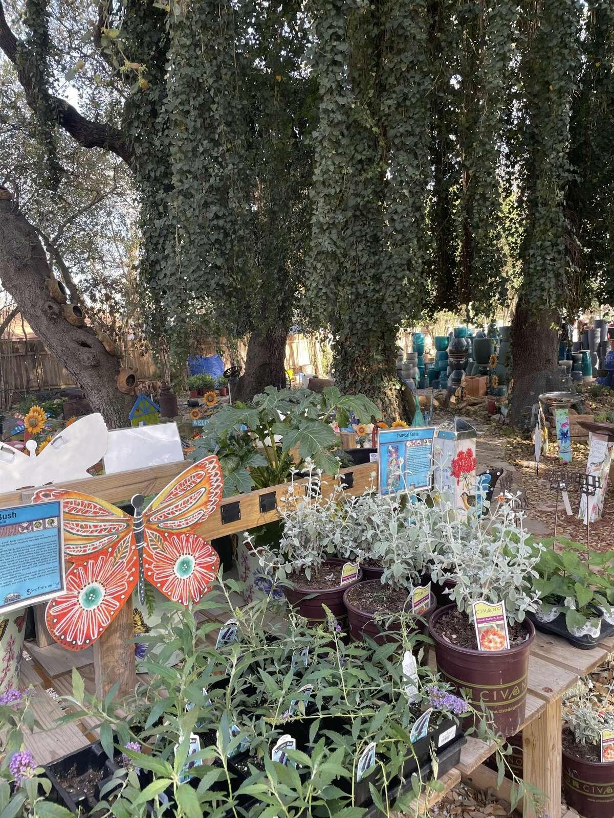 YourSA Best Garden Center Winner: Rainbow Garden Center
