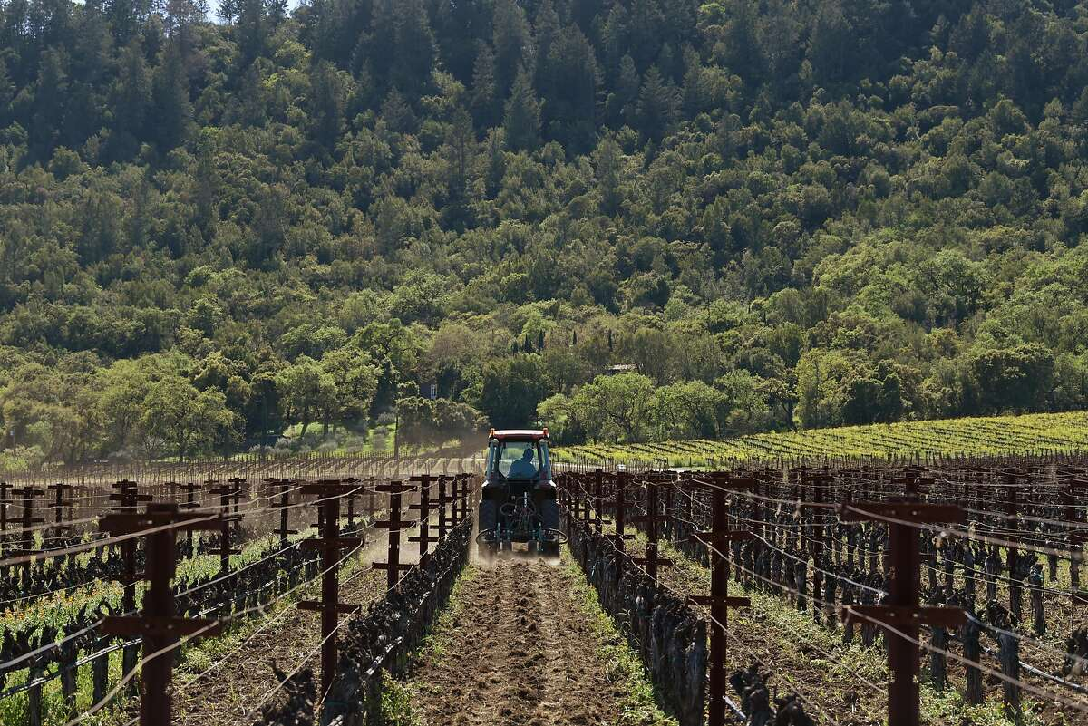 A worker among the vines at Staglin Family Vineyard.