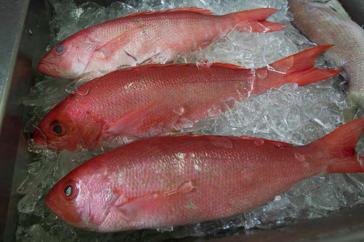FILE - In this May 16, 2012, file photo, fresh red snapper is iced and ready for sale at Aquila Seafood in Bon Secour, Ala. There are about three times as many red snapper as previously estimated in the Gulf of Mexico, according to a study released Wednesday, March 24, 2021, about the popular game and table fish over which recreational anglers and federal regulators have fought for years. (AP Photo/Dave Martin, File)