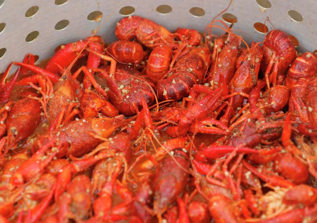 The Tomball High School Athletic Booster Club Crawfish Boil in Tomball and the St. Matthias Catholic Church Crawfish and Shrimp Boil in Magnolia will be offering boiled crawfish April 17. Shown here: Freshly boiled crawfish is seen during the inaugural Crawfish Critic Cook-Off at Southern Star Brewing, Saturday, May 23, 2020, in Conroe.