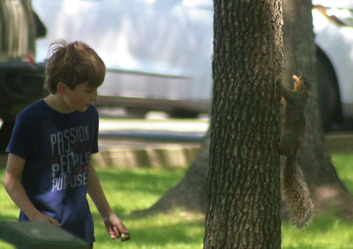 With a peanut already in its mouth, a squirrel plays hide-N-seek with Greer Goodgame in Stevenson Park Thursday afternoon. Greer had finished his Easter egg hunt and was having fun with the park's squirrels.