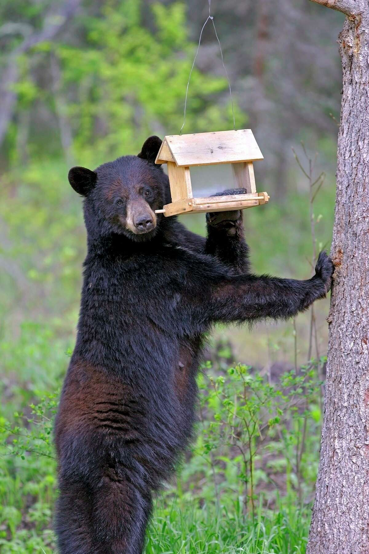 Remove food sources like bird feeders to avoid conflicts with black bears. (Courtesy/Michigan DNR)