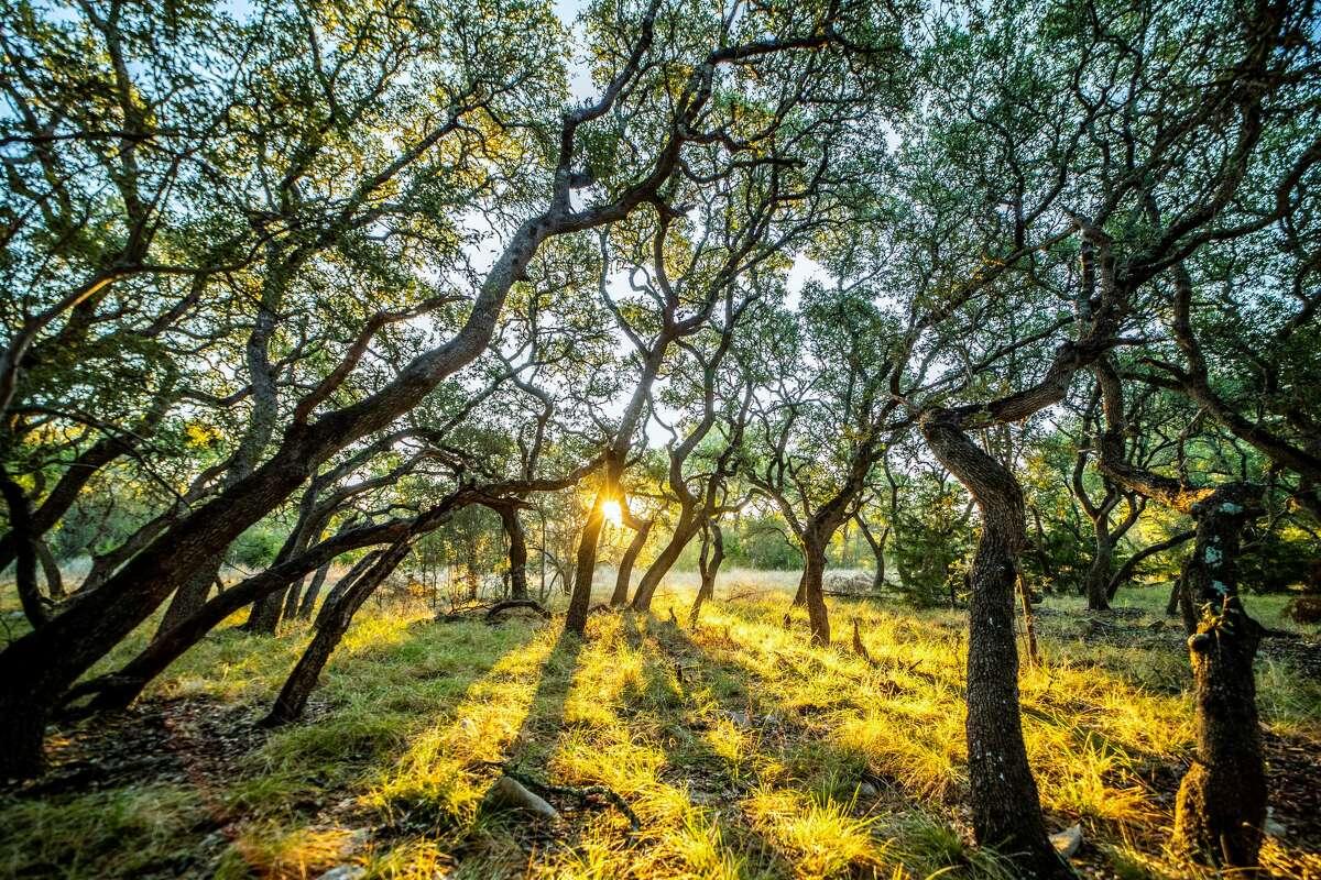 Belle Oaks: Bulverde, Texas