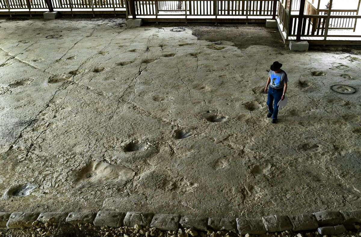 Rich Ferguson walks amid Iguanodon tracks at the Heritage Museum of the Texas Hill Country near Canyon Lake. Ferguson believes the deep tracks were made by a small family of Iguanodons.