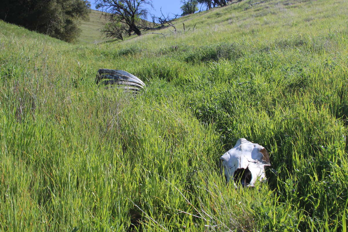 The East Bay is full of skeletons, if you're looking for them.
