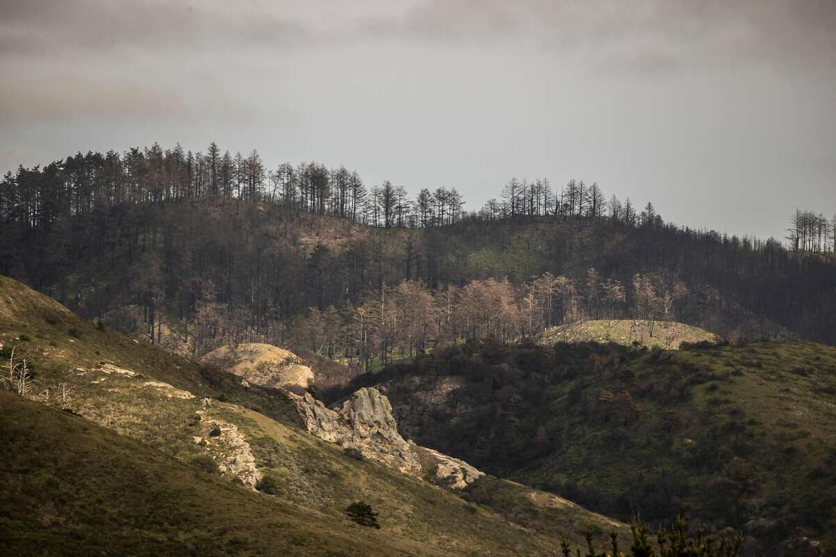 Last year the Woodward Fire burned 4,929 acres of Point Reyes National Seashore, bordered roughly by Limantour Road and Sky Trail stretching south past the Bear Valley Trail and Wildcat Camp. The footprint of the fire remains closed to all access.