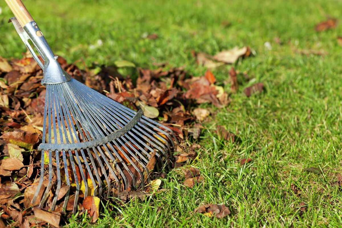 The healthiest thing you can do with fallen leaves is to mulch them in place and let them fertilize your lawn.