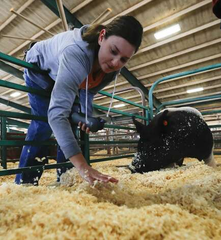 Sarah McMullen spreads out bedding for her sonÕs swine as preparation continues for the return of the Montgomery County Fair and Rodeo, Thursday, April 8, 2021, in Conroe. Future Farms of America students from around the county kicked off the action by moving their swines into the agriculture barn to show. This year, only students will only be able to move their animal into the barn the morning of their animalÕs show as part of the fairÕs COVID-19 safety protocols. Photo: Jason Fochtman/Staff Photographer / 2021 ? Houston Chronicle