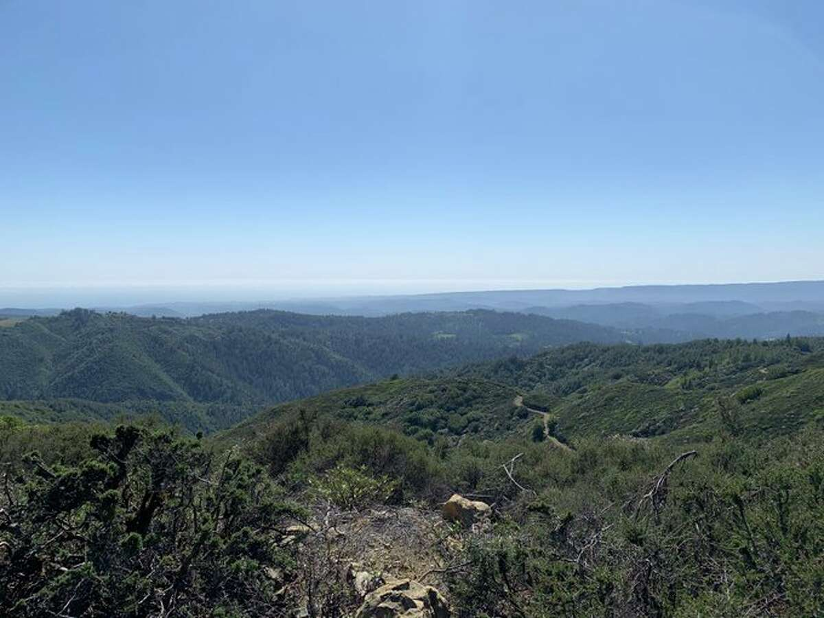Researchers from San Jose State University's Fire Weather Lab visited Mount Umunhum on April 2, 2021, to test for fuel-moisture content in the vegetation.