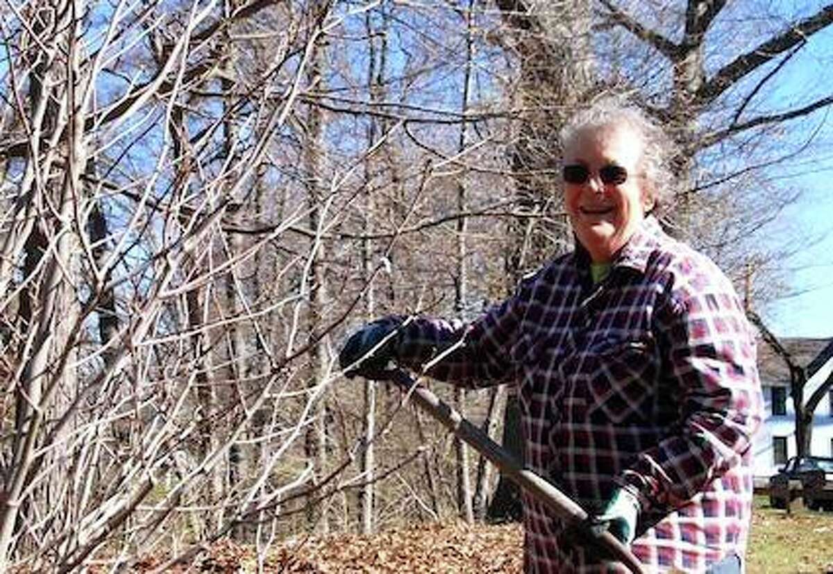 The Milford Tree Giveaway is being held in honor of long-time Milford tree advocate Kate Orrecchio, who died in February at age 84.