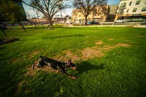 Six years in the making, Maverick Park Dog Park opens this April