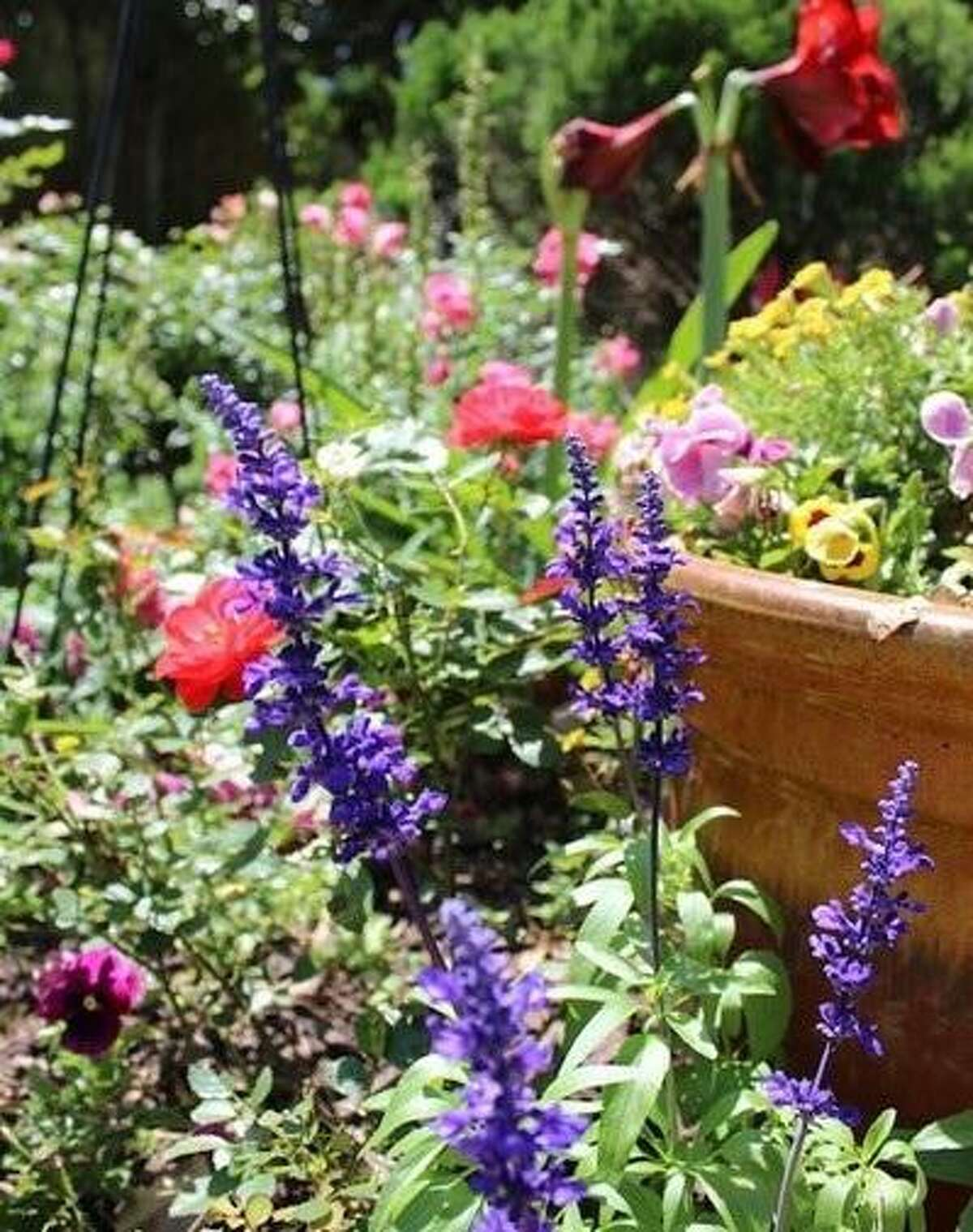 The Quail Valley Garden Club's Annual Spring Plant Sale will be held from 10 a.m. to 2 p.m. Saturday, May 1, at Tee Garden, 2880 La Quinta Drive, Missouri City.