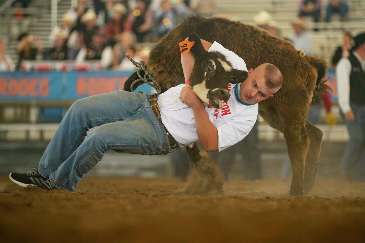 Lane Hess, with Klein Oak FFA, pulls down a calf during a Houston Livestock Show and Rodeo calf scramble, Saturday, April 10, 2021, inside Katy Independent School District's rodeo arena in Katy. Traditionally the calf scramble is held each night during the Houston Livestock Show and Rodeo at NRG Stadium, but this year the calf scramble is being held over two weekends with four scrambles a day to give 4-H and FAA students an opportunity to participate. Fifteen calves are released for each round of 30 students. Students who successfully secure a calf win a $1750 certificate to apply toward the purchase of a registered beef heifer or market steer to exhibit at the 2022 Houston Livestock Show and Rodeo.