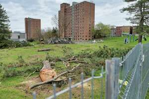 A view of an area of lower Lincoln Park along side Eagle St., where a number of trees were cut down recently, seen here on Monday, April 12, 2021, in Albany, N.Y.  (Paul Buckowski/Times Union)
