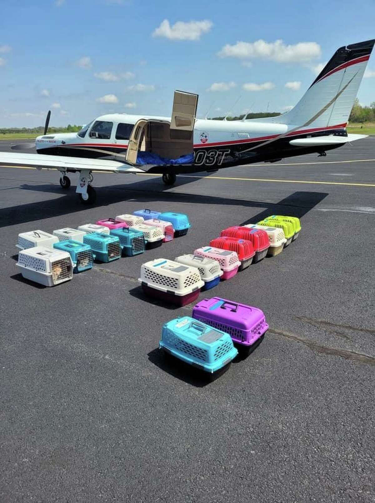 The 33 rescued cats were flown into Danbury Municipal Airport on Saturday and then were driven to New Hampshire for adoption.