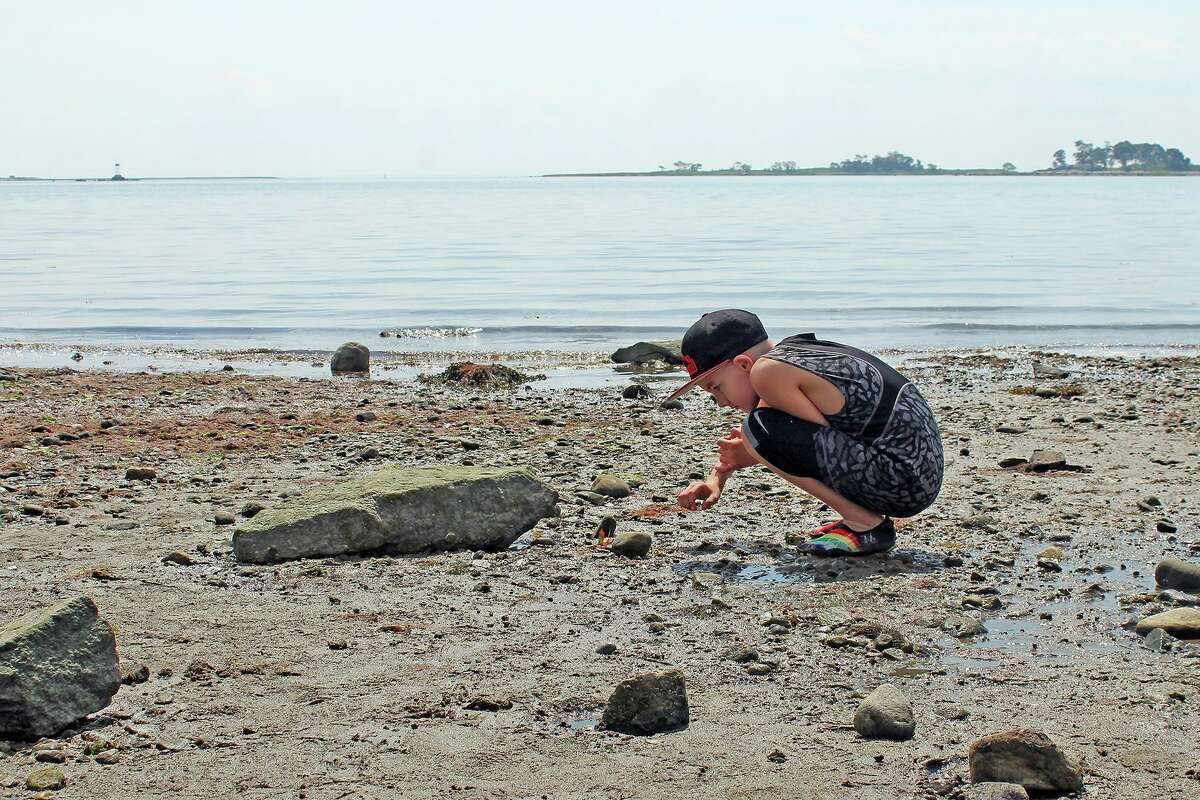 """Look for animals and plants at the beach, at a park, or just in your backyard, then photograph and upload your observations as part of a global """"bio-blitz"""" called City Nature Challenge, April 30 to May 3."""
