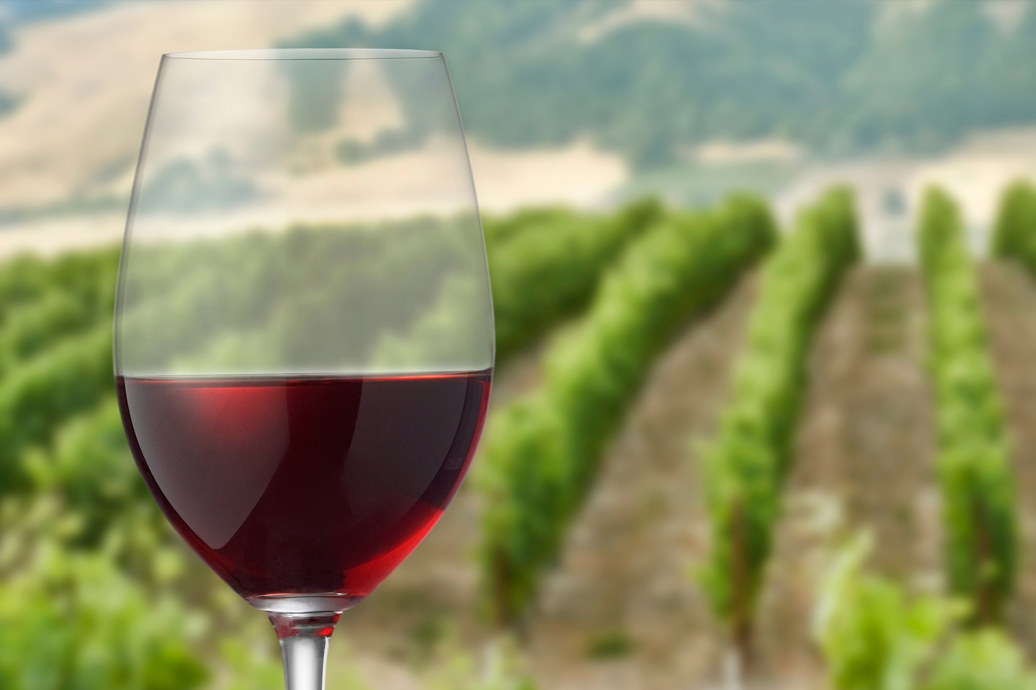A winemaker's guide to choosing a good wine