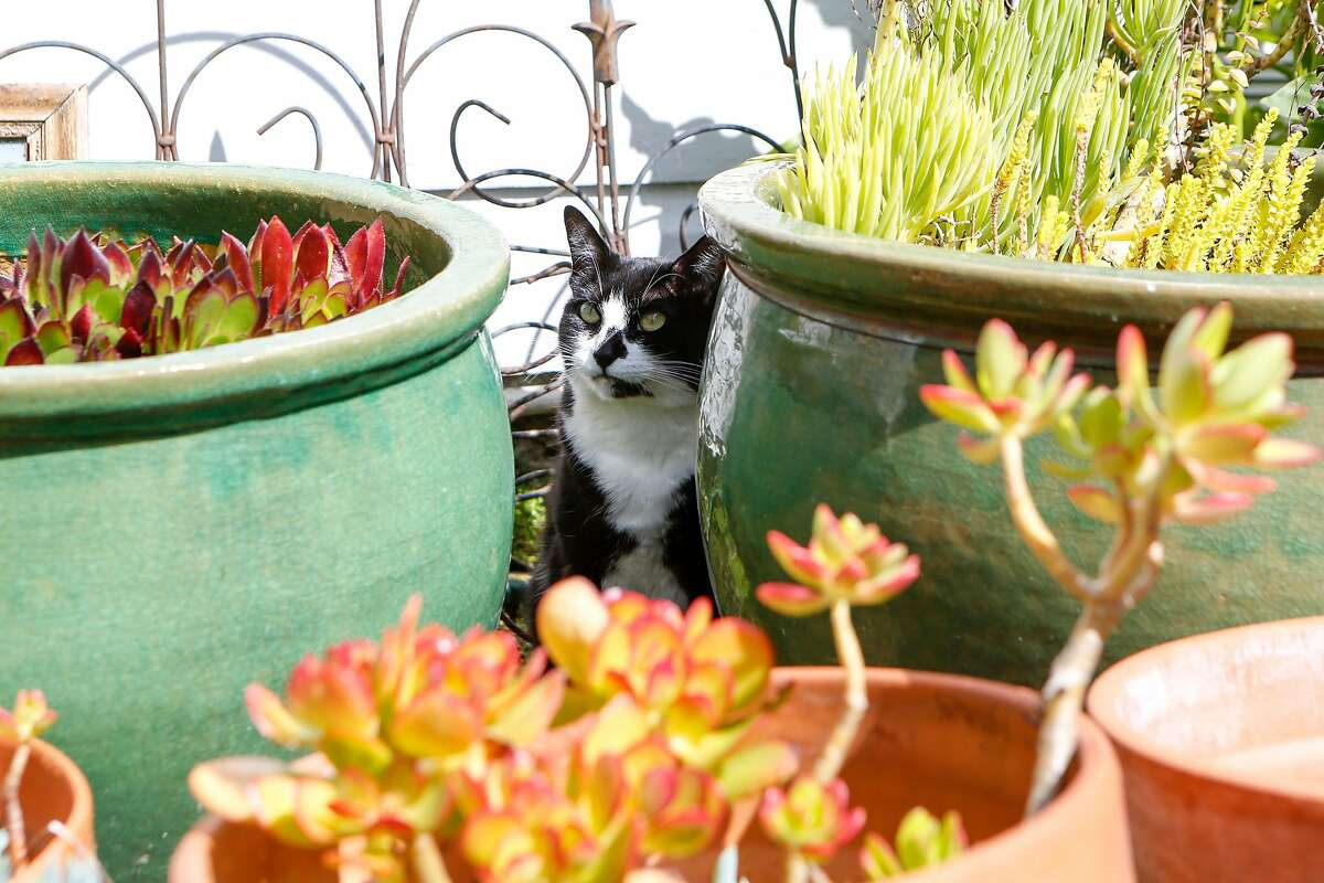 Millie, Jules Kochis' adopted pet, loves to roam her outdoor garden.