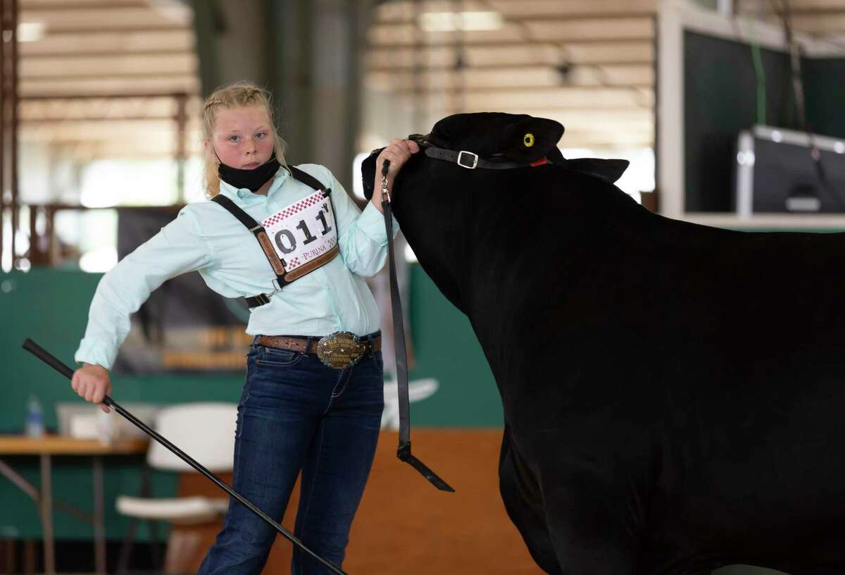 Morgan Winn of Oak Hill Junior High competes during the Market Steer Show at the Montgomery County Fair & Rodeo, Tuesday, April 13, 2021, in Conroe. Students from neighboring schools were able to showcase their steer.