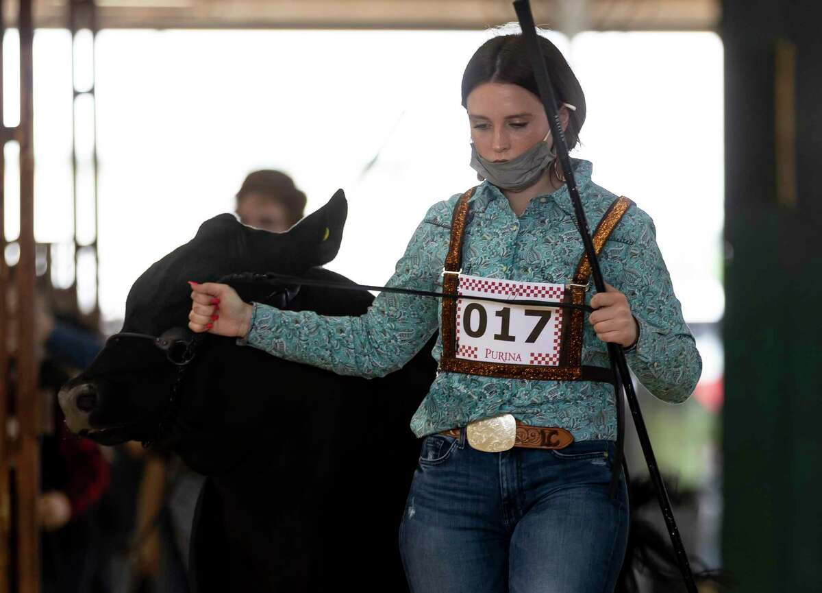 Lauren Chandler of Montgomery High School enters the competition grounds with her steer during the Market Steer Show at the Montgomery County Fair & Rodeo, Tuesday, April 13, 2021, in Conroe. Chandler was able to place third.