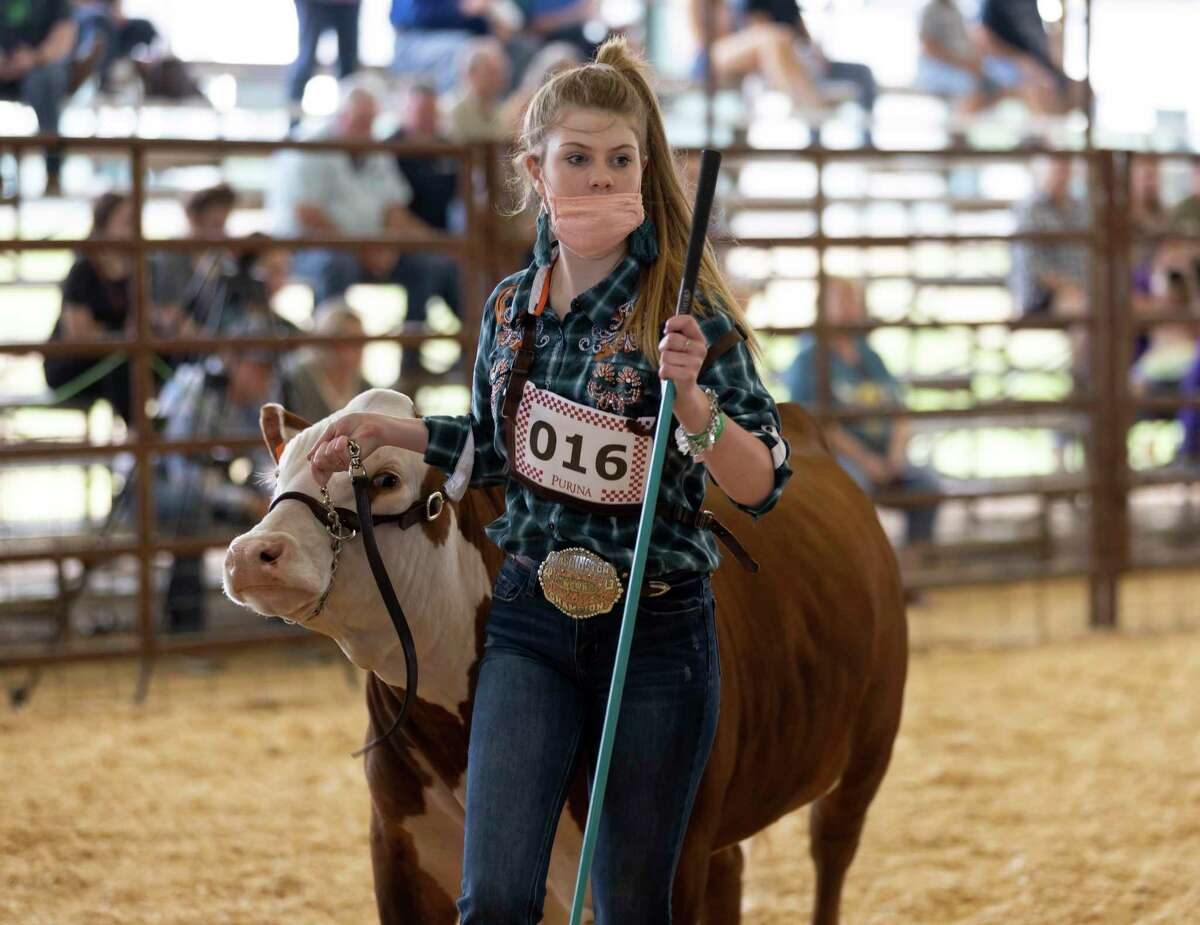 Payton Flynn of Lake Creek High School walks around show grounds with her steer during the Market Steer Show at the Montgomery County Fair & Rodeo, Tuesday, April 13, 2021, in Conroe. Students from neighboring schools were able to showcase their steer.