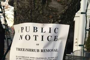 Cherry trees were removed on April 9, 2021 outside of Community Theater in Fairfield's Center. Officials say the original statute posted for the removal was incorrect was since updated.