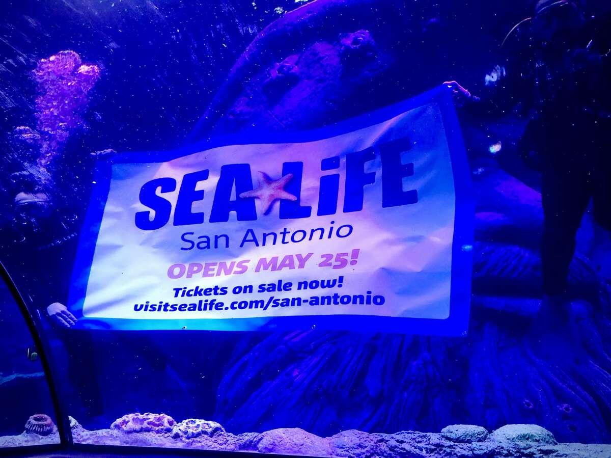 SEA LIFE, the new aquarium at The Shops at Rivercenter, will host a grand opening May 25.