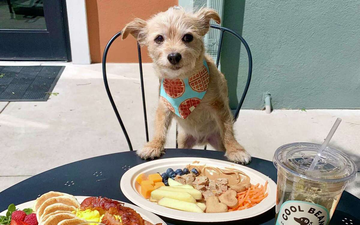 Waffles the Wonder Dog sits down to munch on a Barkuterie Board of apples, cheese, carrots, peanut butter and blueberries from Cool Beans Café.