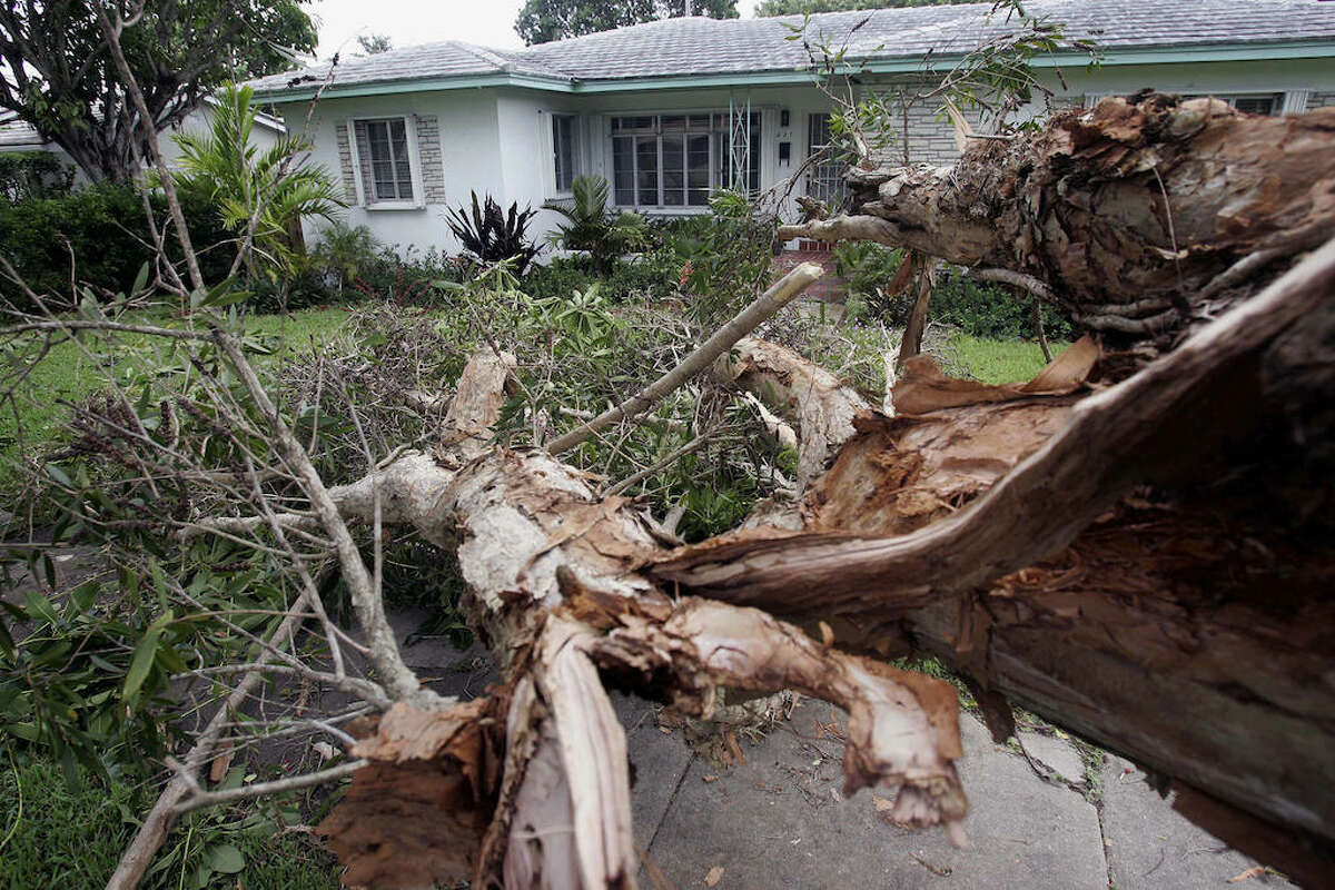 Houston's own Jose's Tree Service has 2 Chron-exclusive offers to help you trim your trees in time for hurricane season!