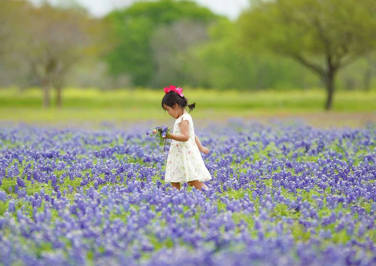 Emrie Phan, 3, of Cypress, makes her way through a field of bluebonnets in Brehnam, Texas on Sunday, April 4, 2021. It was her family's first time checking out the Texas wildflower.