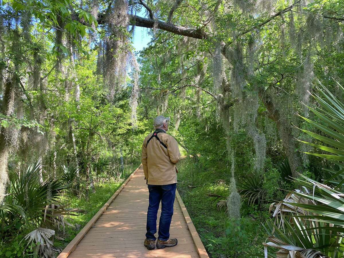 Migrator and resident birds can be seen along the boardwalk and trail through Bobcat Woods at the San Bernard National Wildlife Refuge. Photo Credit: Kathy Adams Clark. Restricted use.