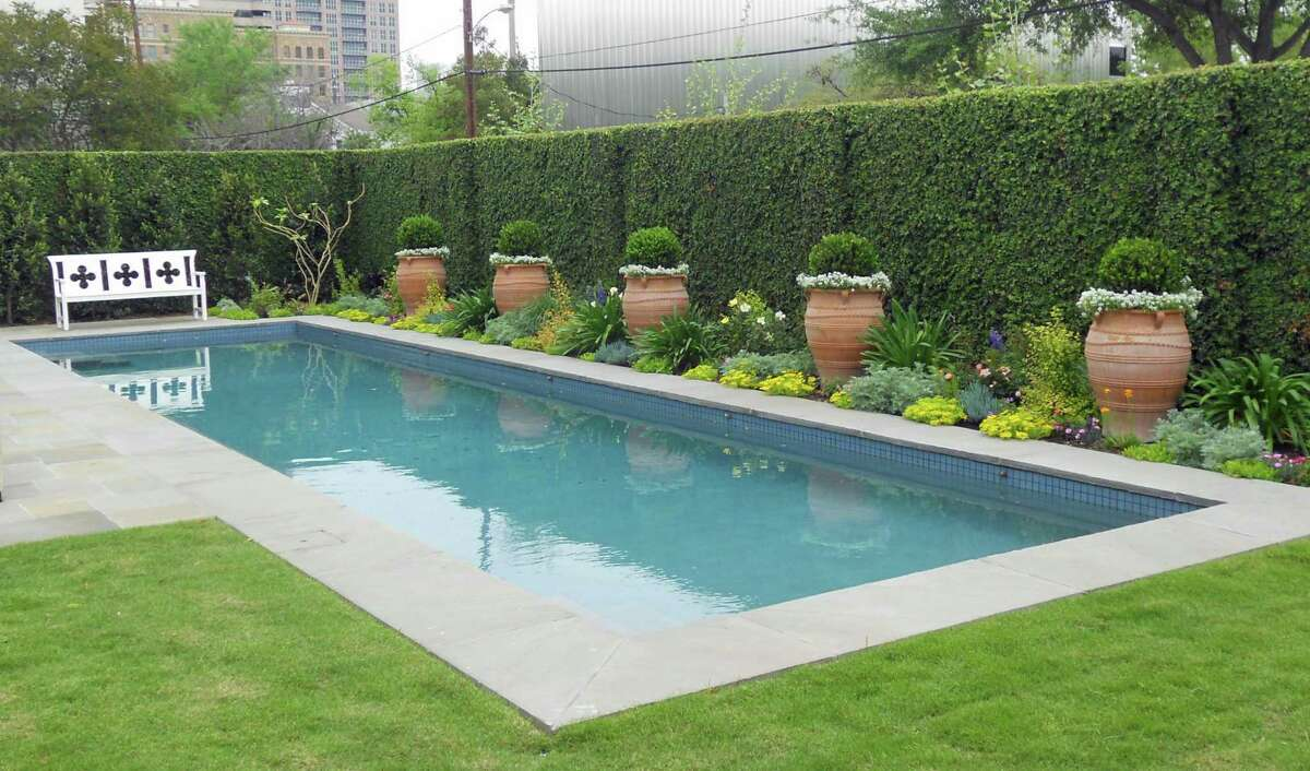 Boxwood is a good option for a privacy hedge.