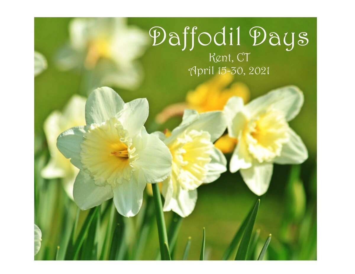 Kent Chamber of Commerce's Daffodil Day celebration, April 15-30