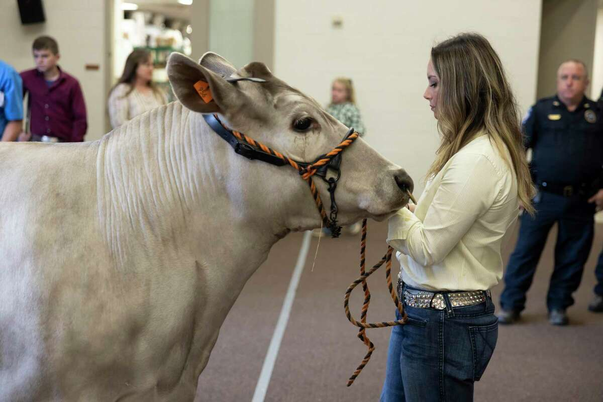 Taylor Turner of College Park High School prepares her Grand Champion Steer for an auction during the Junior Livestock Auction at the Lone Star Convention Center, Wednesday, April 14, 2021, in Conroe. Turner's steer sold for $55,000 and will be used toward college expenses.