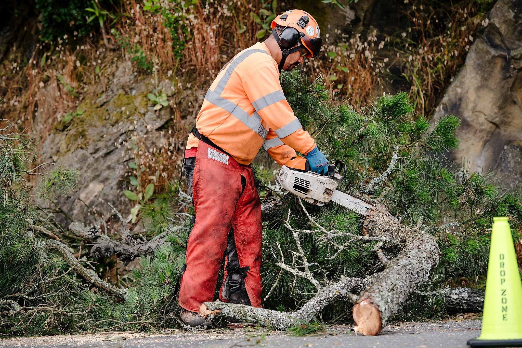 PG&E's 2020 tree trimming failures lead to extra regulatory oversight