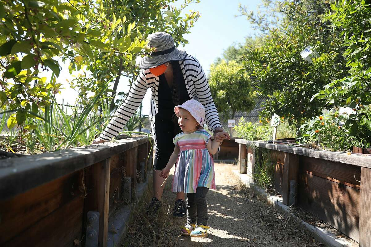 Kaz Werner picks a weed from a communal planter at The Community Garden as she holds her daughter Rose's hand during a visit to check on their planter on Thursday, April 15, 2021 in Santa Clara, Calif